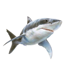 tiburón freetoedit