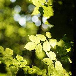freetoedit green nature leaves background