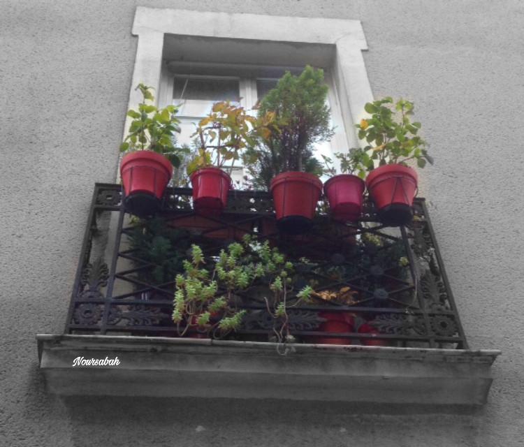 #window #plants #photography
