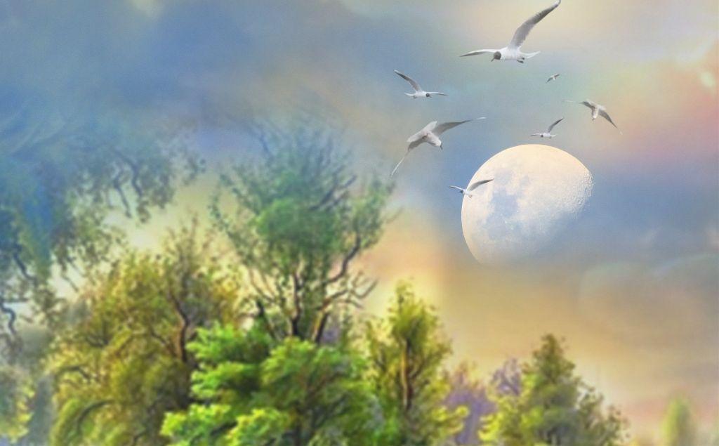 #freetoedit #picsart #nature #forest #green#sky#birds #moon #myedit #madewithpicsart #creative #inspiration #remixed