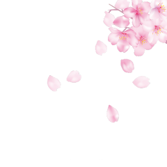 ftestickers cherryblossoms petals falling floating freetoedit