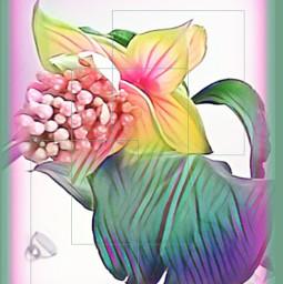 flower pinkflower intersting myflowers naturephotography