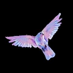pastel dove doves galaxy freetoedit