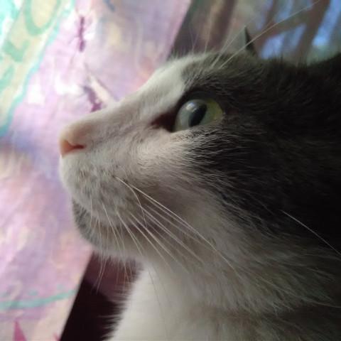 #cat,#gato,#picsart,#amor,#pcmyfavshot