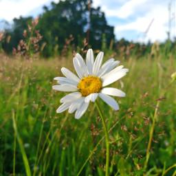 freetoedit flower wildflower grassland myphoto pcmyfavshot worldphotographyday