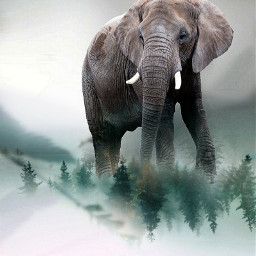 freetoedit elephant forest cold remix