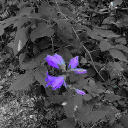 freetoedit camera myphoto photography colorsplasheffect