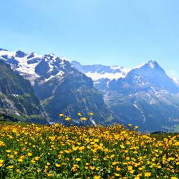 freetoedit switzerland mountains field flowers