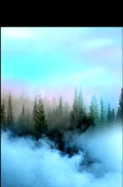 ftestickers nature landscape forest fog freetoedit