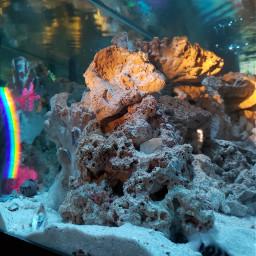 freetoedit fish fishtank rainbow pcmyfavshot worldphotographyday