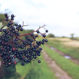 berries hedgerows trees outandabout freetoedit