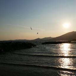 freetoedit sunset seagull waves phonephotography