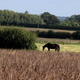 landscape horse countryside outandabout freetoedit