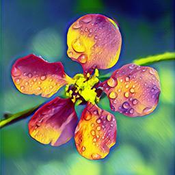 flower dew dewdrops magiceffect musicvibes