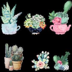 watercolor succulents flowerpot freetoedit