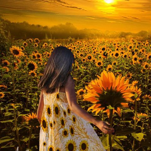 #freetoedit,#girl,#sunset,#remix,#srcsunflowerselfie