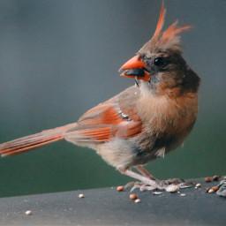 freetoedit throughmywindow canonphotography birds thingsinmybackyard