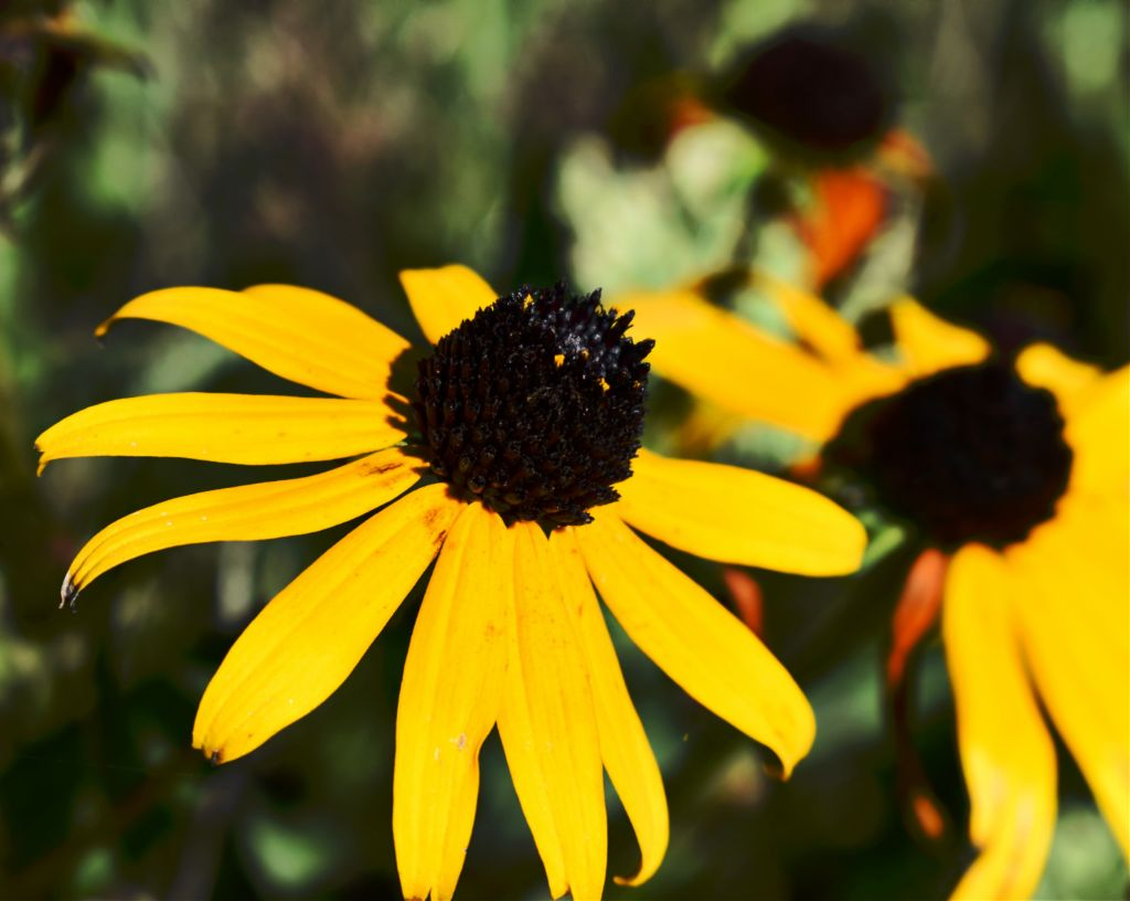 #freetoedit #myphotography #myphoto #nature #flower #drama #peddles #picsart #sun #color #ligt #nikon