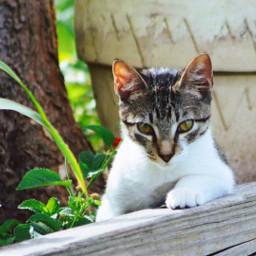 freetoedit cats animals cute baby