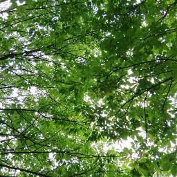 freetoedit remixit tree trees nature