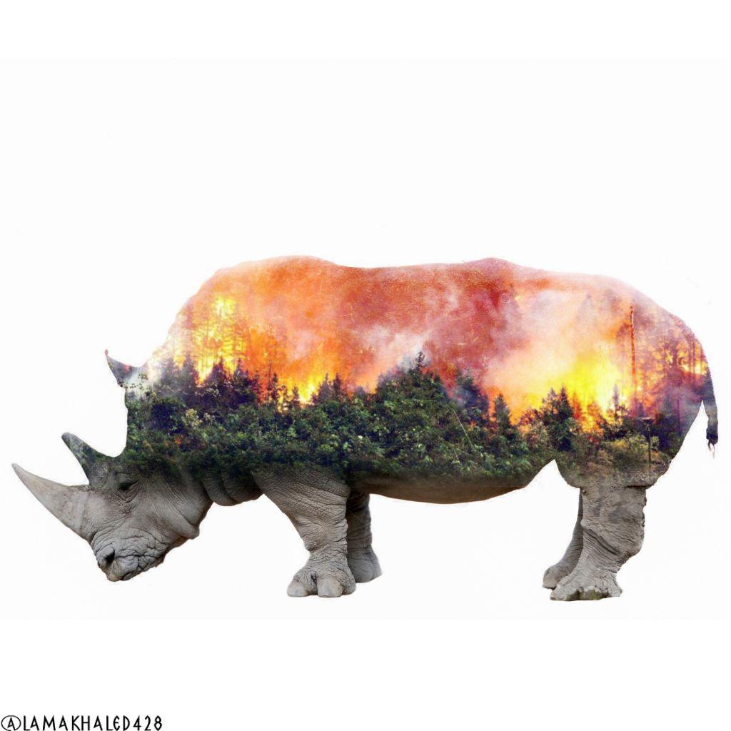 freetoedit actforAmazon fire Amazon rhino trees sky fla
