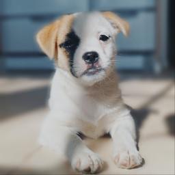 dog puppy animal myphoto freetoedit pcmyfavshot worldphotographyday
