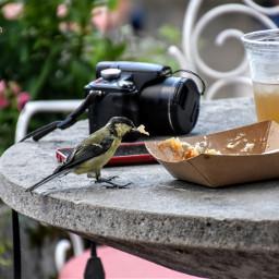 birds bluetit summer moments