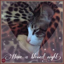 cat puppy sleep blessed nigth freetoedit
