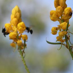 freetoedit nofilter flowers bright inmyneighborhood