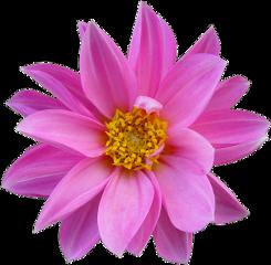 cuorelucymy lucymy mialu flowers freetoedit