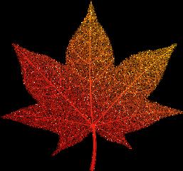 maple leaf yellow overlay mapleleaf freetoedit
