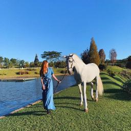 freetoedit criação cavalos natureza verde💚 pcpetsofpicsart