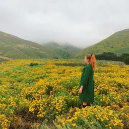 freetoedit campos flores natureza vida