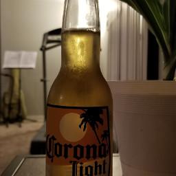 photography drink beer plant corona