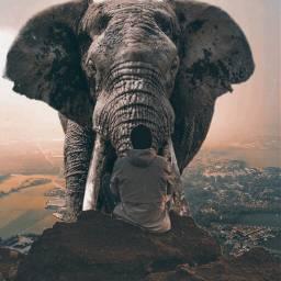 freetoedit elefant animals landscape beautiful