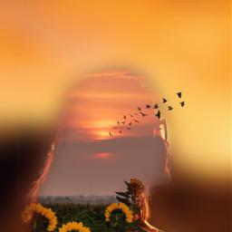 freetoedit doubleexposure silhouettestencil ornge sunflowers