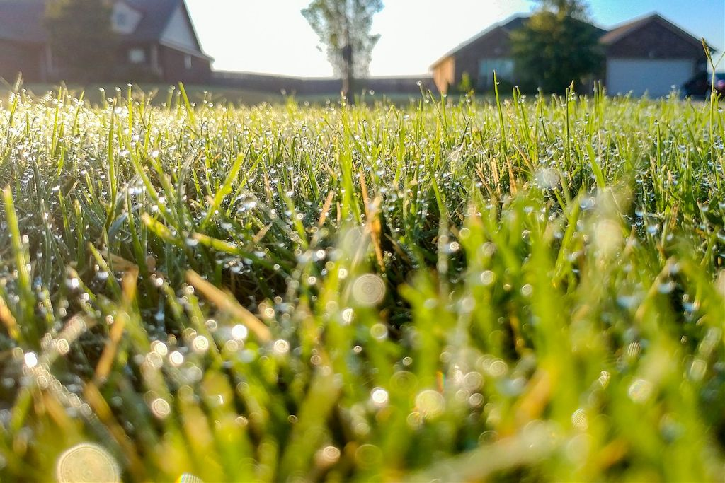 Our new home has so much!! #sweethomealabama 🐶💕 #grass #dogslovegrass #dew #morningdew #dewdrops  #freetoedit