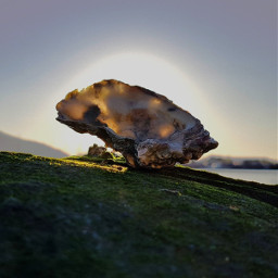 shell backlight nature photography rock