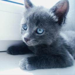 freetoedit cat pcpetsofpicsart petsofpicsart