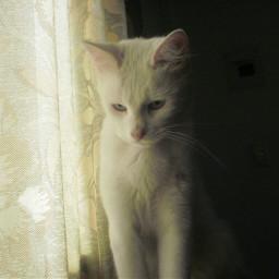 cat catlove♥ catday catgirl gata
