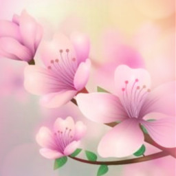 freetoedit background backgrounds flowers cherryblossoms