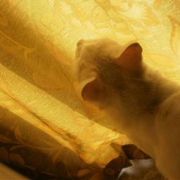 catlover cat