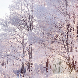 freetoedit photo forest winter edit