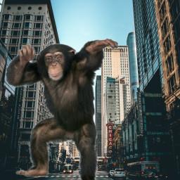 freetoedit stickers monkey ecgiantanimals giantanimals