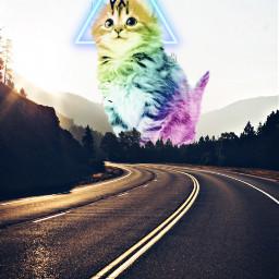 freetoedit cat colors lovepiscart ecgiantanimals