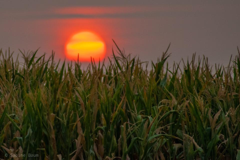 #photography #myphoto #photooftheday #sunrise #morning #sky #sun #landscape  #freetoedit