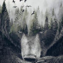 freetoedit dobleexposure bear animals blackbear ecgiantanimals