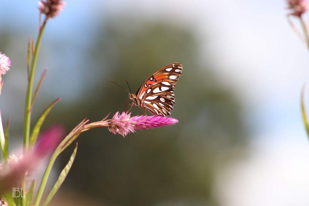 ❎ Contest photo  #freetoedit #myoriginalphoto #nature #colorful #photography #flowers #butterfly  #pcminimalism