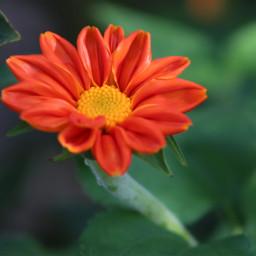 freetoedit solitary singleflower colorful photography