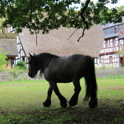 freetoedit photography myphoto openairmuseum horse